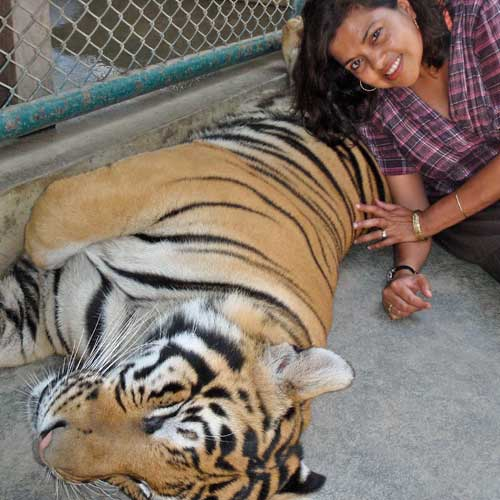 Author Mitali Perkins and tiger in Chiang Mai, Thailand