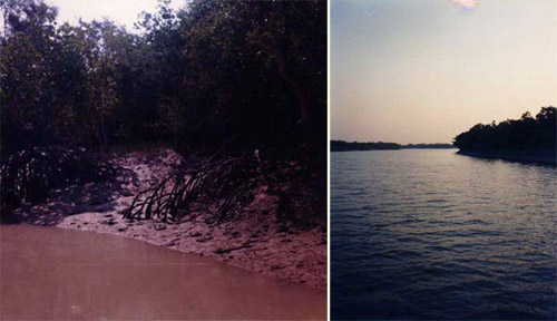 Photos from artist Proiti Roy's travels in the Sunderbans - tiger pug marks on the left